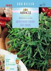 Miracle Zahter Kekiği Tohumu (200 Tohum) 50 Adet