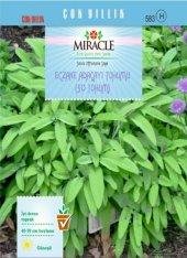Miracle Eczane Adaçayı Tohumu (50 Tohum) 10 Adet
