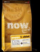Pet Curean Now Fresh Tahılsız Yavru Açık Köpek Mama 2kg