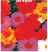 Ipek Şellaki Çiçeği Tohumu 10+tohum***