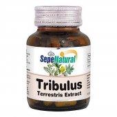 Tribulus Ekstresi Kapsül 90 X 480mg Sepe Natural
