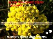 Altın Otu Ölmez Çiçek Kudama 250gr Doğal Taze