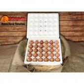 3x30&#039 Lu Gezyum Ekstra Taze Günlük Gezen Tavuk Yumurtası