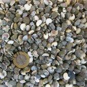 Tahtakale Toptancısı Umbinium Kiloluk Deniz Kabuğu (1 Kg)