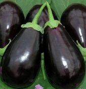 Adana Dolmalık Patlıcan Tohumu 10 Gram