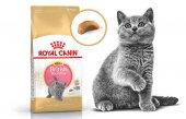 Royal Canin British Shorthair Kitten Yavru Kedi Maması 2kg