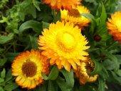 Kuru Çiçek Tohumu