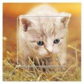 Dekoratif Baskılı Elektrik Düğmesi Priz Kapı Zili Yavru Kedi