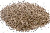 Süt Otu Tohumu Ryegrass Trinova Tohumu Süt Otu Tohumu Yem Bitkisi 25 Kg İtalyan Çimi Ryegrass Tohumu Yem Bitkisi Tohum