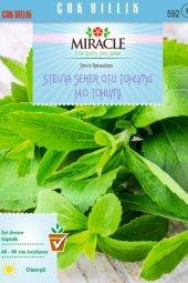 Doğal Stevia Şeker Otu Tohumu (40 Tohum)