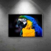 Papağan Hayvanlar Dekoratif Canvas Tablo