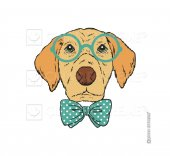 Doctor Dog Sticker Çınar Extreme