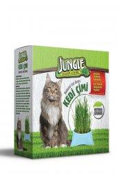 Jungle Sindirimi Rahatlatıcı Kedi Çimi