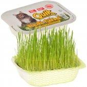 Quik Doğal Kedi Çimi (Fileli)