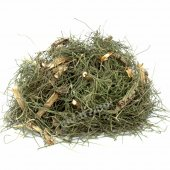 At Kuyruğu Otu (Kırkkilit Otu) (Equisetum Arvense)...