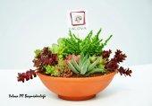 Teraryum (Küçük) Canlı Sukulent Bahçesi Yalova Posta Pazarı Succulent