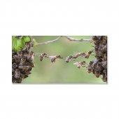 çalışkan Arılar Kanvas Tablosu 40 Cm X 80 Cm