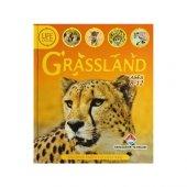 Life Cycles Grassland