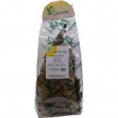 Avokado Yaprağı 50gr Pkt